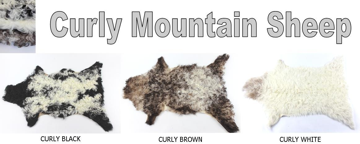 Curly Mountain Goat