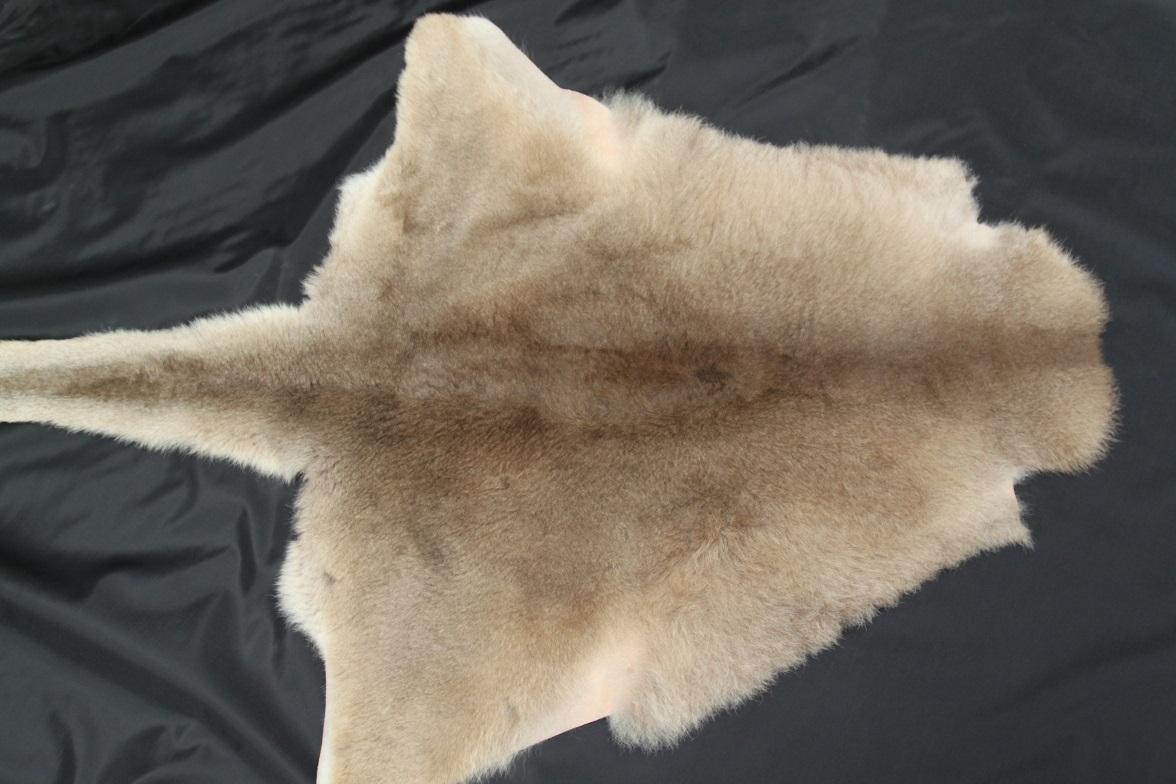 Kangaroo skin hair on grey