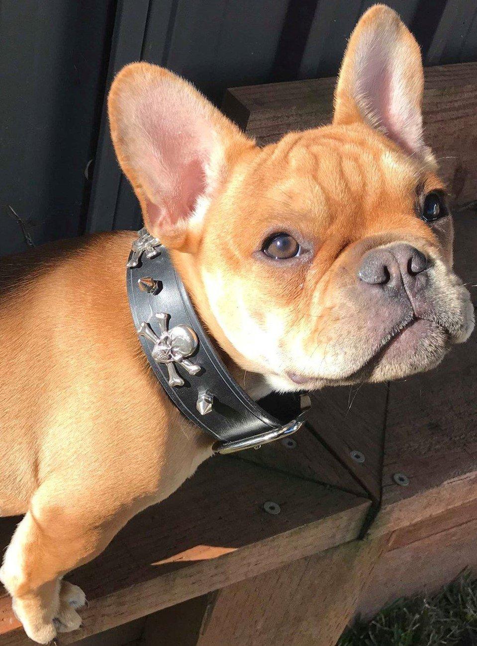 Make a Belt or Dog Collar 9/10