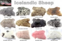 Icelandic Sheep skins - Click for more info
