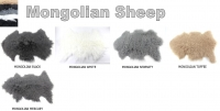 Mongolian Sheep skins - Click for more info