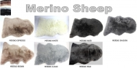 Merino Sheep - Click for more info