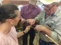Introduction To Plaiting - Click for more info